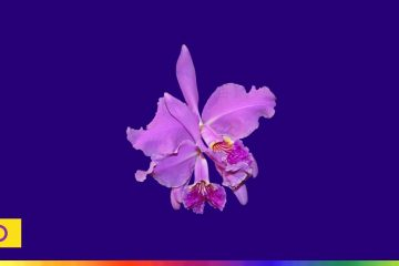 Intersex training - a purple orchid and the intersex flag on a blue background, with a colourful spectrum line along the bottom of the image